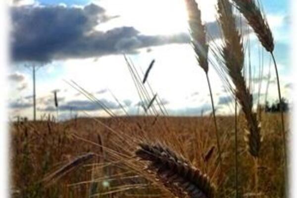 Informacja dotycząca składania wniosków o oszacowanie szkód w gospodarstwach rolnych powstałych w wyniku suszy w 2019 r.